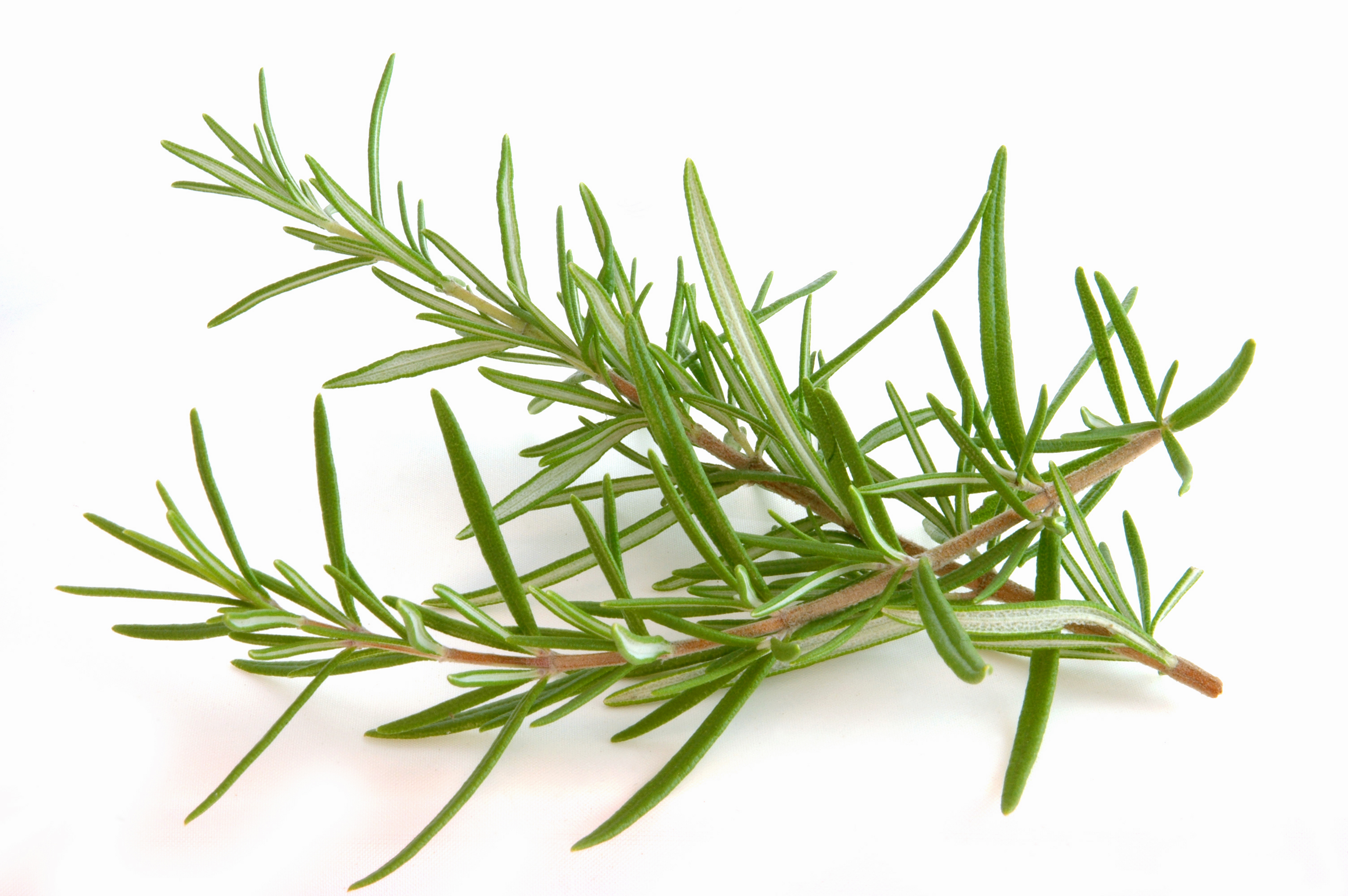 Freezing an easy way to preserve summer herb bounty » Currents » The Free Press, Mankato, MN