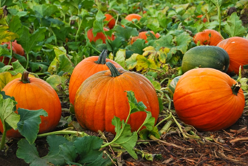 That Pinch of Pumpkin - NYTimes.com