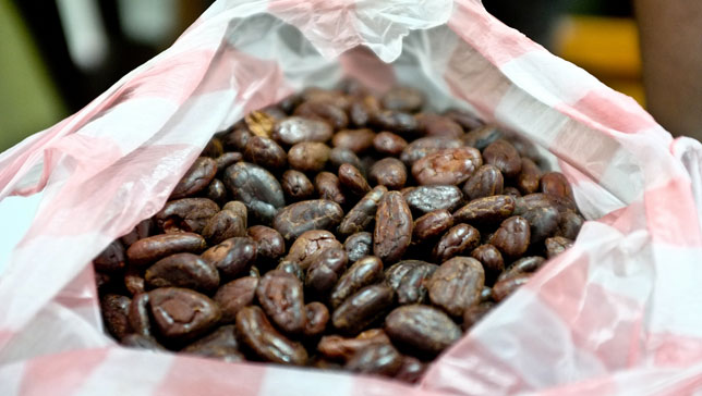 Cocoa bean compound staves off memory loss | MNN - Mother Nature Network